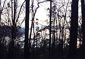 Logan Martin Lake View Lots For Sale